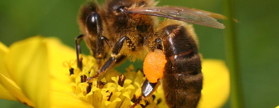 Bijen buitenplaats
